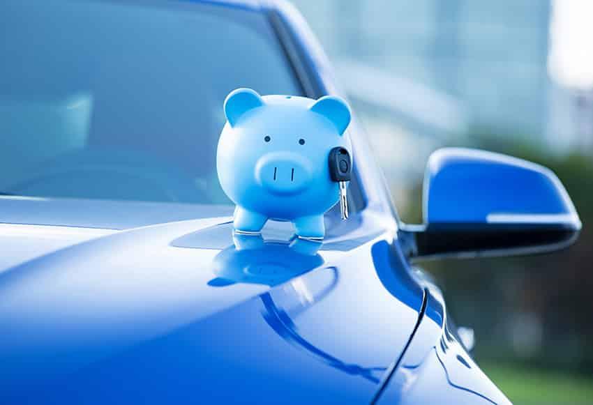 דובי פרווה כחול על אוטו כחול